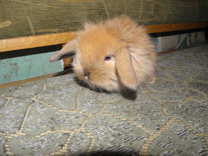 Как сделать кролику клетку в домашних условиях