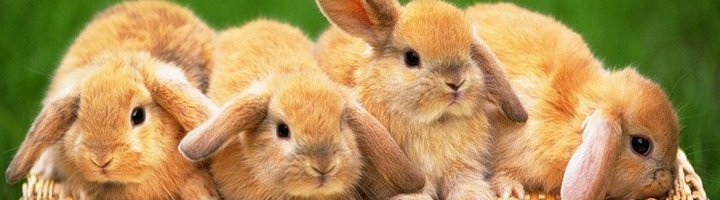 Кролики как за ними ухаживать в домашних условиях 129
