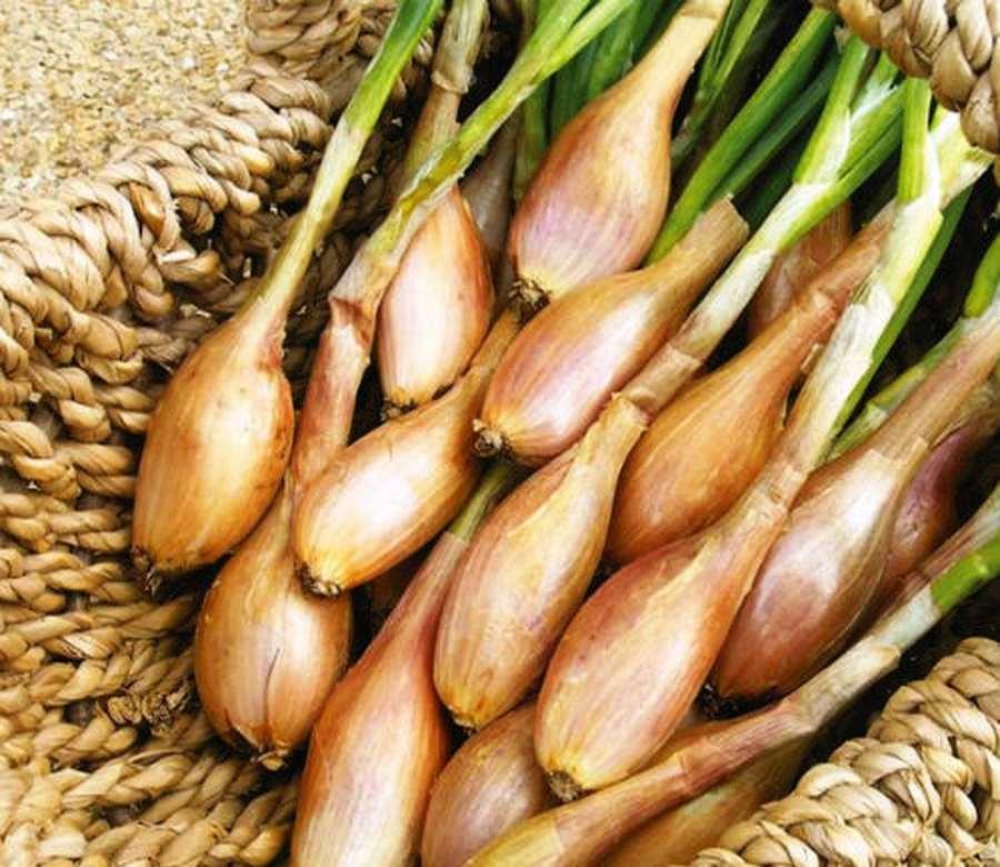 хорошие семена лука