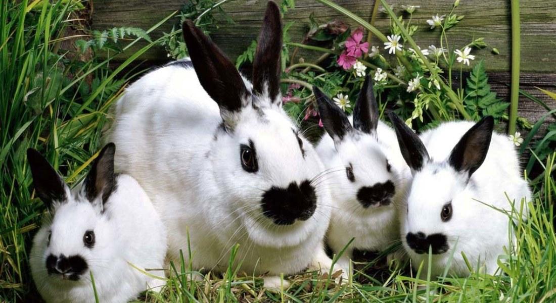 Маленькие кролики и их болезни