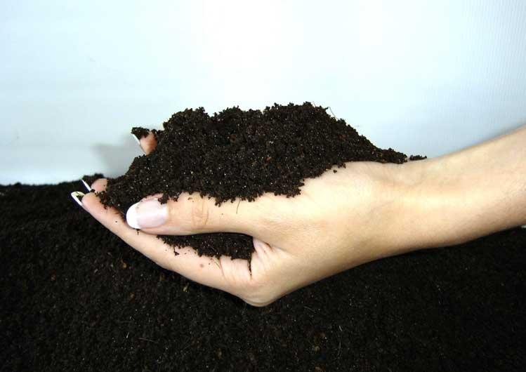 Почва для строманты