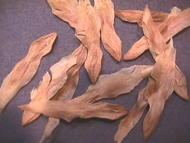 Семена вриезии