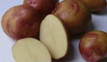 Разрез картошки