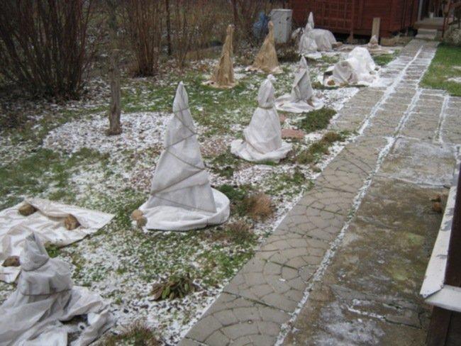 Укрытие деревье на зиму