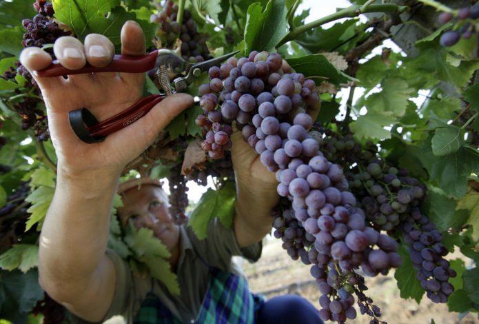 нормировка гроздей