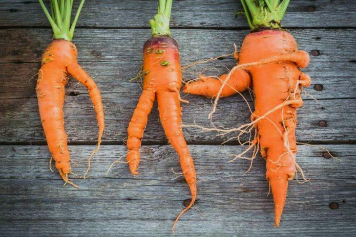 кривая морковь