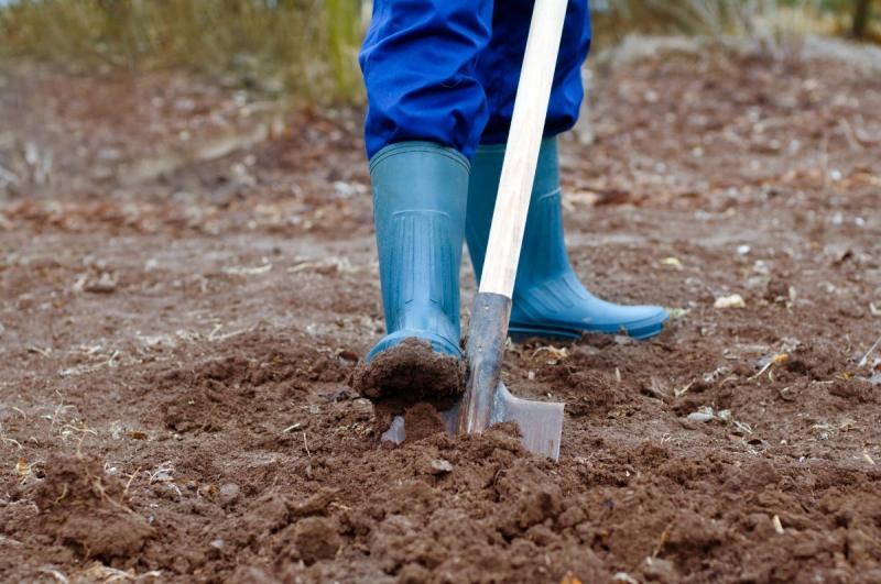Нужно ли осенью перекапывать землю в огороде
