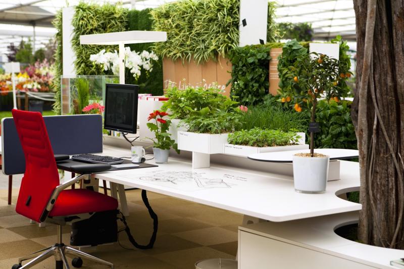 Неприхотливые комнатные растения и цветы для офиса