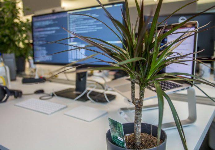 Цветы для офиса без солнечного света