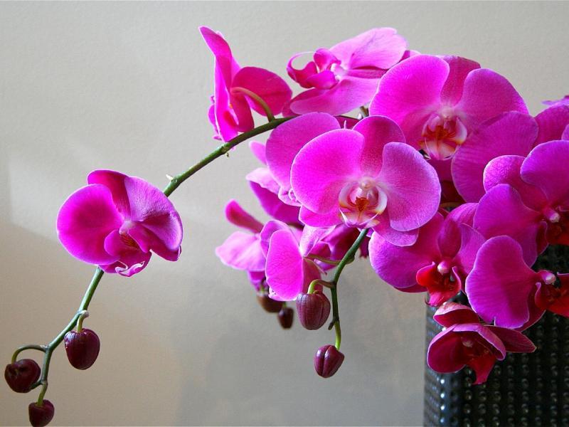 Можно ли держать дома орхидеи приметы и суеверия