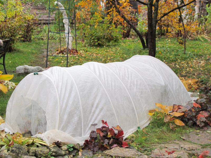 Как укрыть клубнику на зиму правильно