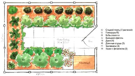 Расположение растений в парнике