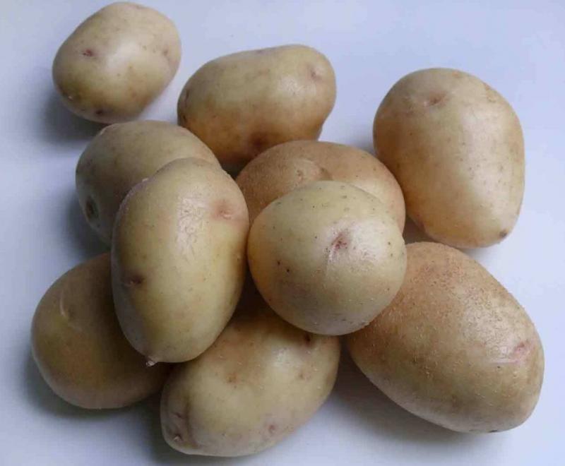 Картофель Невский: описание и характеристика сорта, выращивание и уход, фото