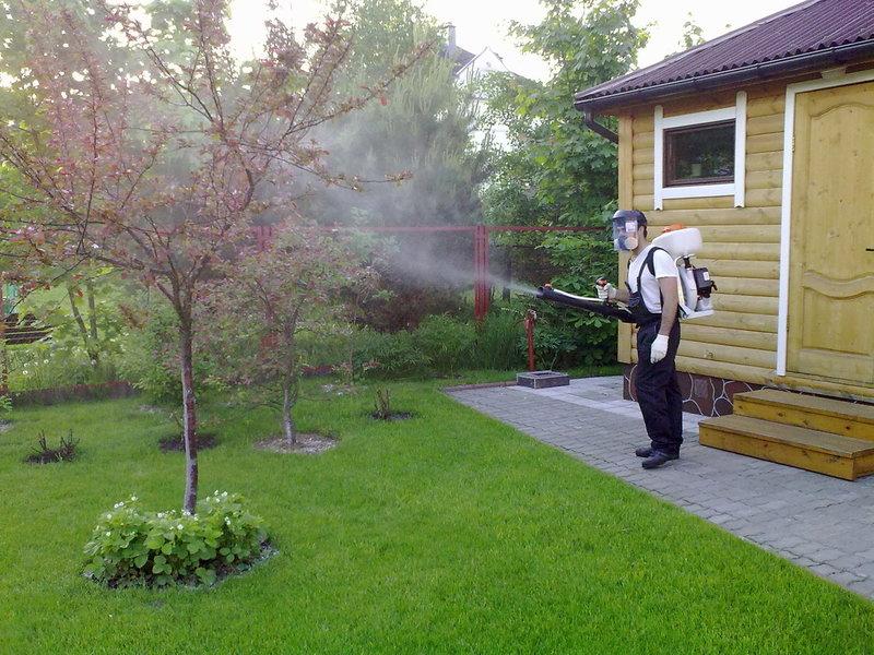 Опрыскивание медным купоросом плодовых деревьев весной