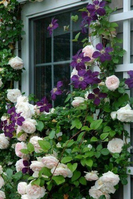 Бледно-розовая роза и клематисы