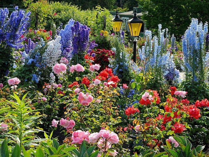 Цветущие розы и дельфиниум