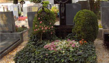 Зеленые растения на могиле