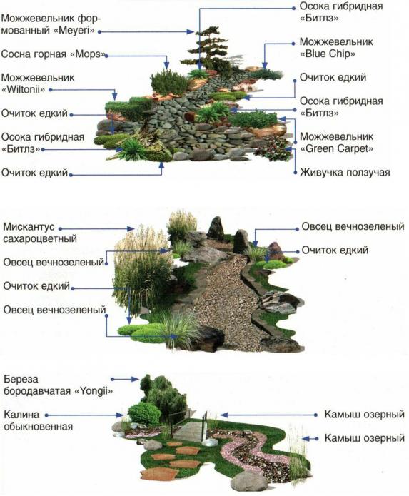 Варианты размещения растений