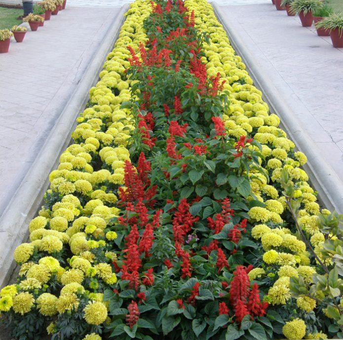 картинки цветочная рабатка еще