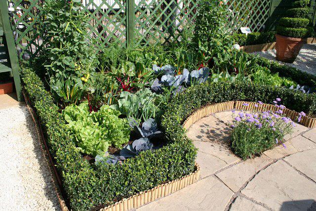 Декоративный огород на малой площади