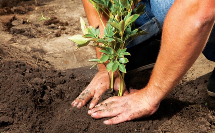 Утрамбовывание почвы