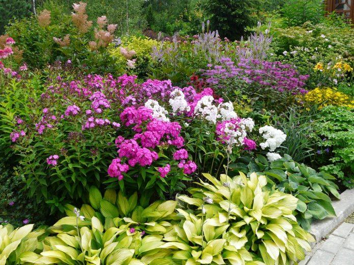 Высокие растения для миксбордера