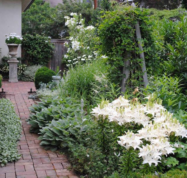 Среднерослые растения