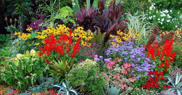 Миксбордер непрерывного цветения