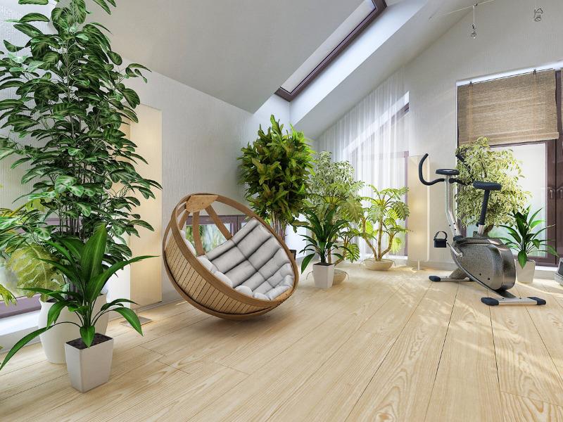 самого фото квартир с растениями поверхности матовая или