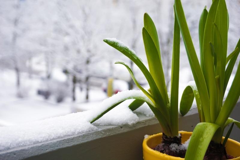 Как перевезти комнатные растения?