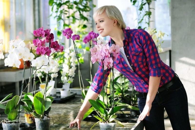 Почка на корне орхидеи